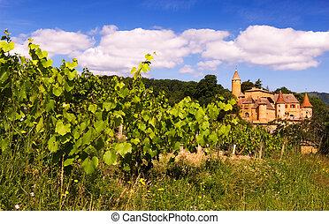 szőlőskert, beaujolais