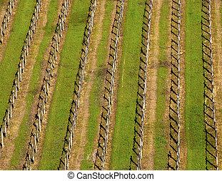 szőlőskert, eredet, olasz