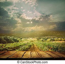 szőlőskert, háttér