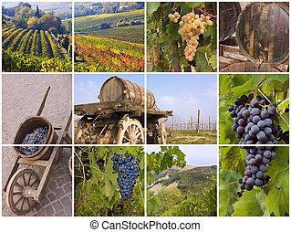 szőlőskert, olasz