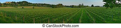 szőlőskert, panoráma