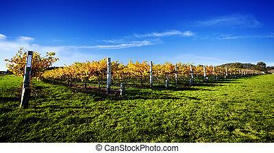 szőlőskert, vibráló