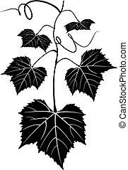 szőlőtőke, szőlőskert, fa, motívum, felcsavar, tervezés, ...