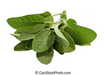 szałwia, liście
