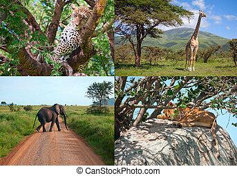 szafari, alatt, africa., állhatatos, közül, vad, animals.
