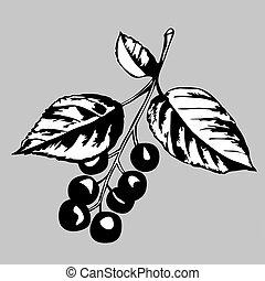szary, rodzaj, wektor, wiśniowe drzewo, ilustracja, tło