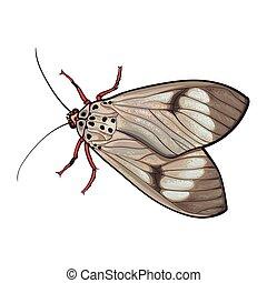 szary, rys, górny, odizolowany, ilustracja, moth, styl, ...