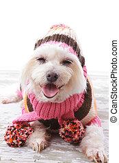 szczęśliwy, pies, w, ciepły, wełniany, sweter, i, szalik