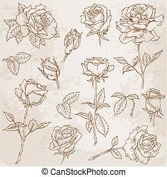 szczegółowy, kwiat, ręka, róże, wektor, pociągnięty, set:
