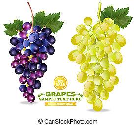 szczegółowy, odizolowany, realistyczny, wektor, winogrona, ilustracje, 3d, grono