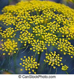 szczelnie-do góry, żółty, flower.