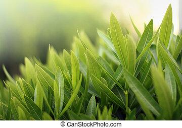 szczelnie-do góry, zieleń, płytki, dof.