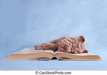 szczeniak, książka, spanie