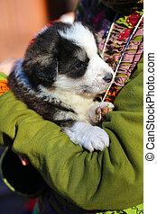 szczeniak, pies, tulenie, dziecko