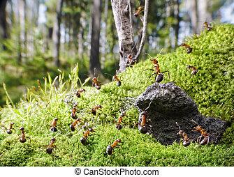 szef, jego, czerwony, mrówki, ludzie