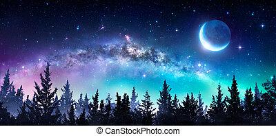 szelíd, éjszaka, erdő, irány, hold