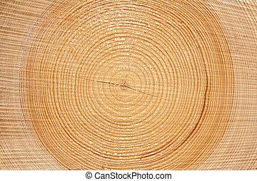 szelet, közül, erdő, faanyag