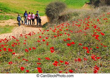 szellőrózsa, piros virág, virágzás