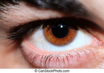 szem, emberi