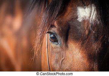szem, ló, closeup