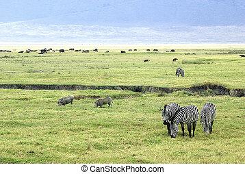 szene, savanne