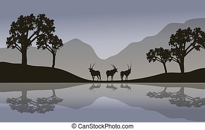 szenerie, antilope, riverbank