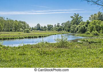 szenische ansicht, von, der, park, in, der, zentrieren, von, der, große stadt, in, der, summer., mit, a, lagune, mitte, und, grün, bäume.