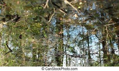 szenische ansicht, wald, in, fruehjahr, reflektiert, wasser