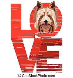 szeret, terrier, yorkshire