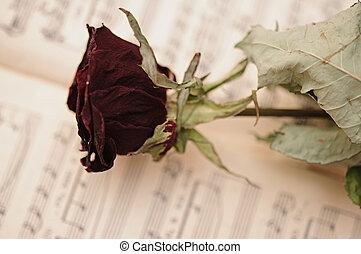 szeret, zene beír