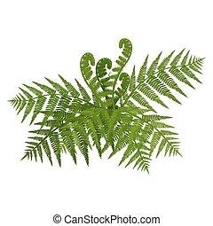 szeroki, liście, ilustracja, paproć, krzak, wektor, zielony, otwarty