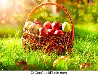 szerves, alma, alatt, a, basket., orchard.