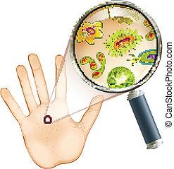 szkło powiększające, bacteria, i, wirus, komórki