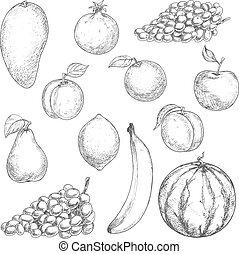 szkice, jadło, świeży, projektować, owoce