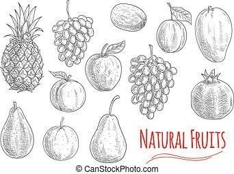 szkice, kasownik, jadło, wegetarianin, projektować, owoce