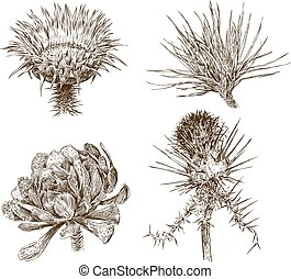 szkice, rośliny, różny, odważny