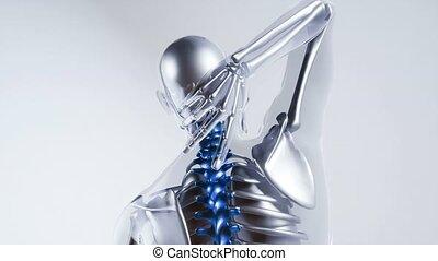szkielet, kręgosłup, ludzki, kość, wzór, organy