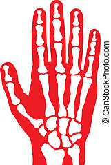 szkielet, ludzka ręka