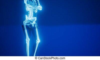 szkielet, radiografia, medyczny mają rytm, ludzki