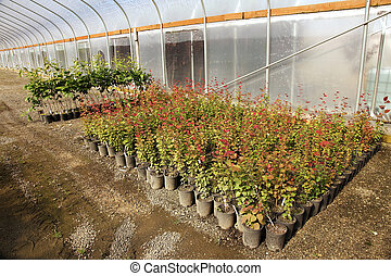 szklarnia, roślina pokój dziecinny, oregon