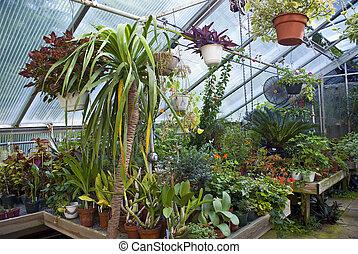 szklarnia, rośliny