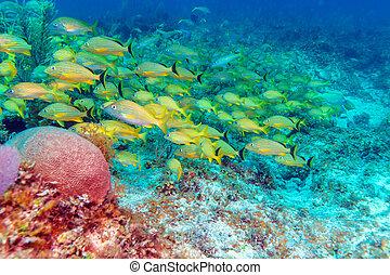 szkoła, żółty, ryby