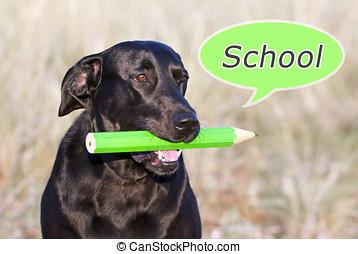 szkoła, pies