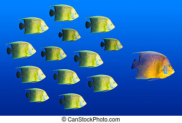 szkoła, pojęcie, wielka ryba, -, tropikalny, przewodnictwo, przewodniczy, ryby
