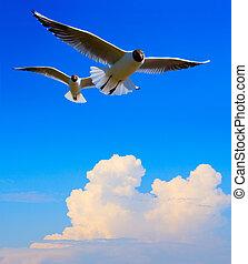 sztuka, lecący ptaszek, w, błękitne niebo, tło