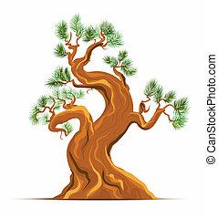 sztuka, stary, wektor, drzewo, sosna