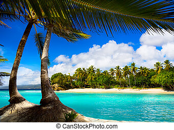 sztuka, tropikalny, karaibskie morze, laguna