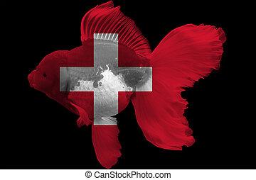 szwajcaria, złota rybka, bandera