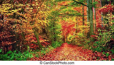 táj, ősz erdő, színes