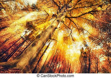 táj, ősz erdő, varázslatos